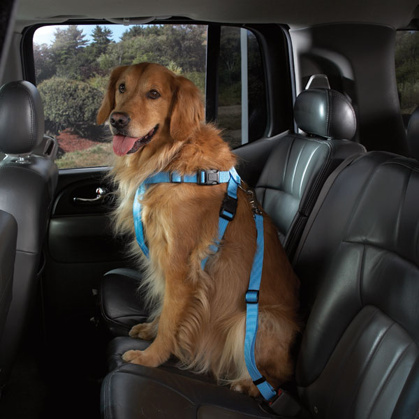 Petster.no - Petsters Cruising Companion Car Harnesses - Blue