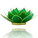 Lotuslyktan i snäckskal - Guldmetall  Grön - Chakra 4