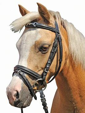 TRÄNS -SHETTY- BETT- HKM - Avena Horse Fashion 5355d9c88f617